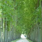 Celle französischer Garten